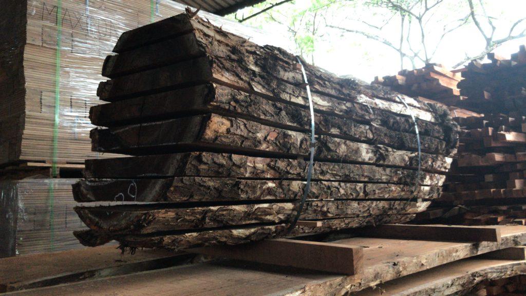 American Walnut Log